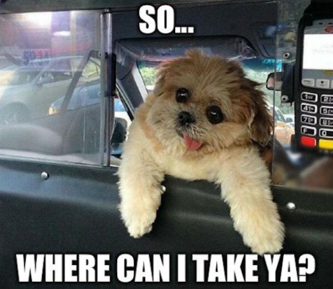 so-where-can-i-take-ya-taxi-dog