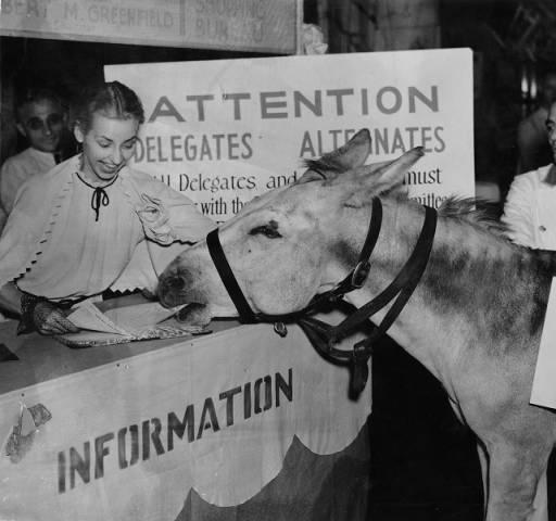 DNC1936_donkey