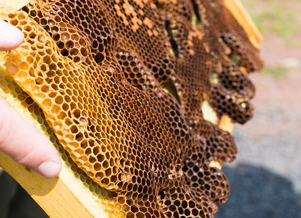 lunafarm-credit-danyahenninger-honeycomb