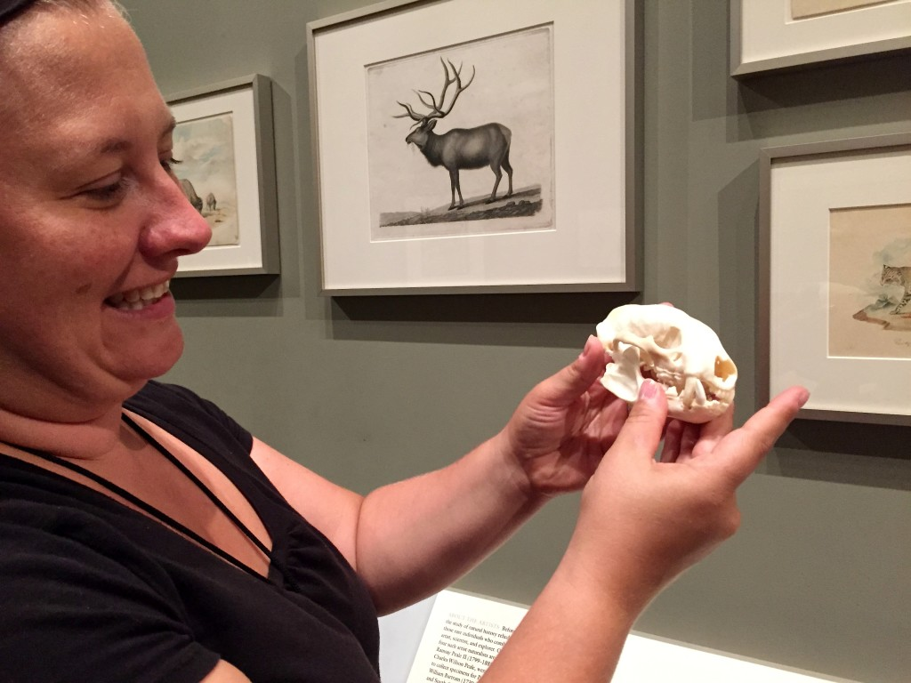 A museum curator shows us a badger skull in front of where primitive drawings of animal species hang.