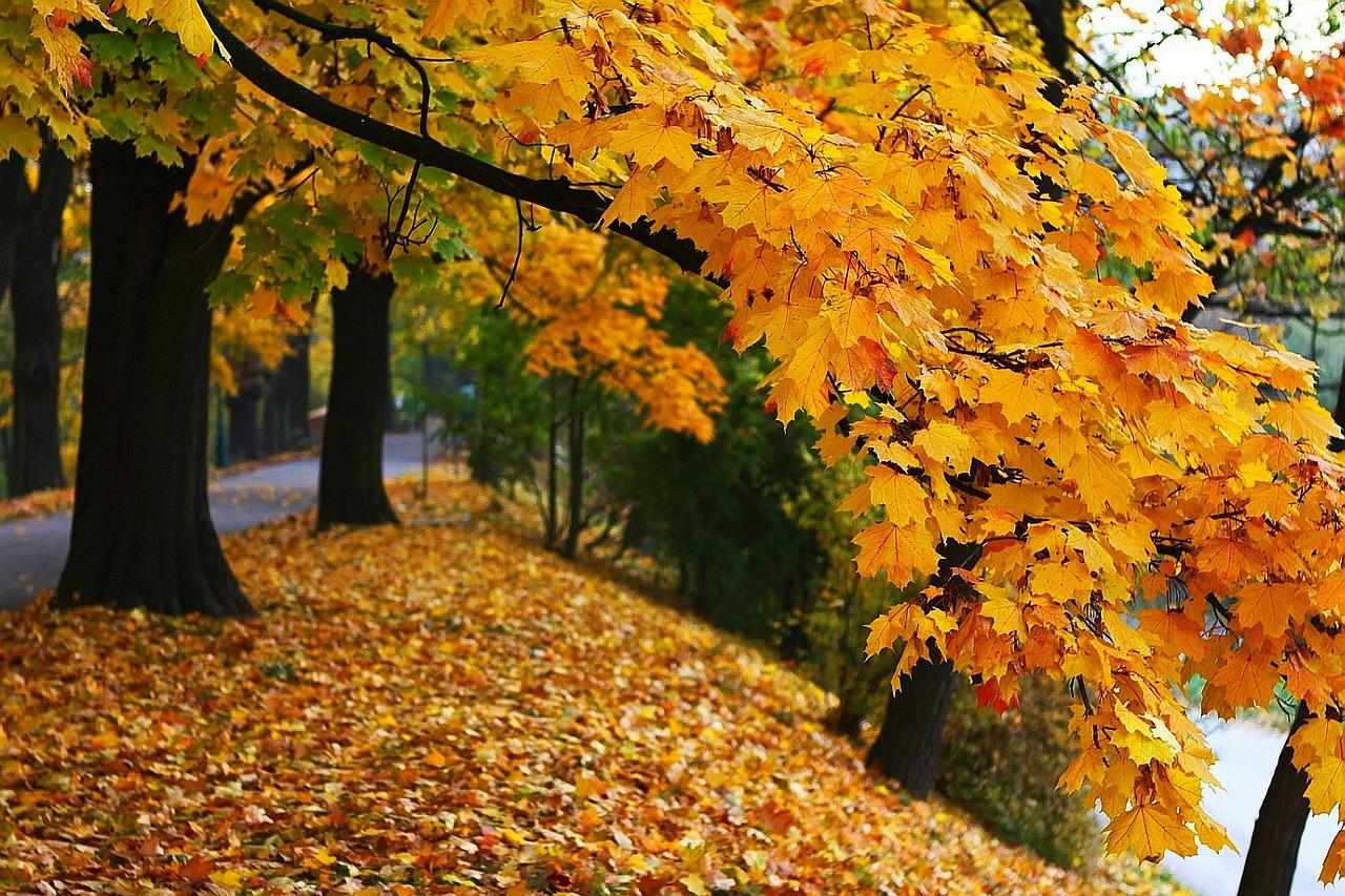 autumn-19806_1280
