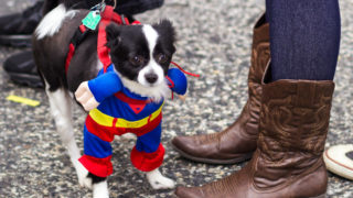 Even dogs get into the costume game at the annual Mummer's Parade