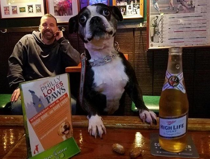 This pooch got pretty comfy at Brownie's Irish Pub in South Philly.