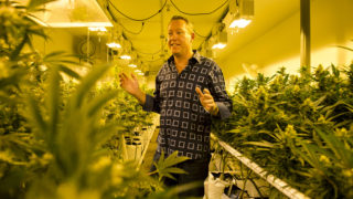 Colorado Harvest Company CEO Tim Cullen explains how the yellow tint of high-pressure sodium lamps aids in the life cycle of marijuana plants inside one of his company's flowering rooms in its 10,000-square-foot facility in South Denver. Cullen was photographed Sept. 16 during a tour of the facility.