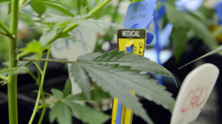 Patients will soon be able to get medical marijuana in South Philly.