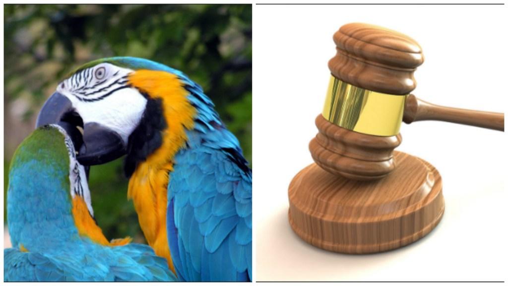 parrot-gavel