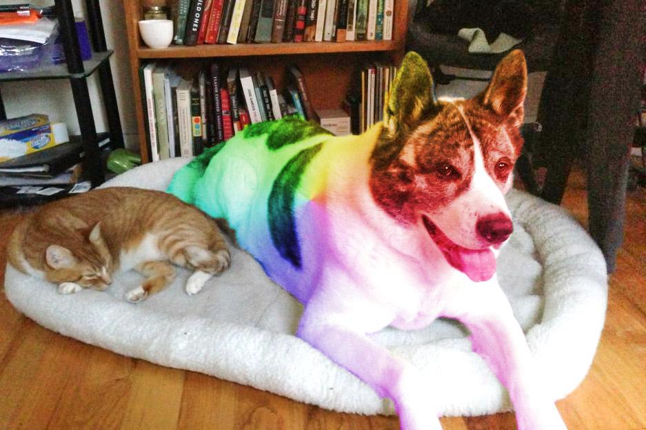 mikoto-rainbow