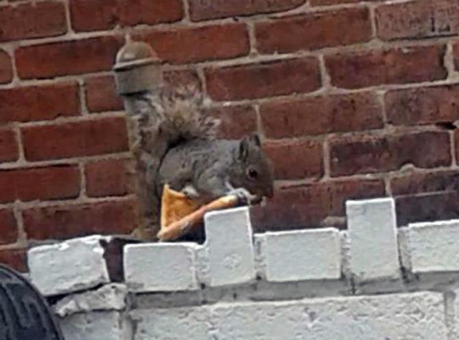 pizza-squirreledited-2