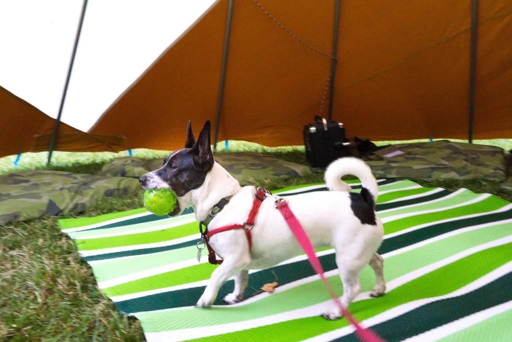 A pup enjoys Clark Park