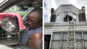 Baxter the cat reunited with his owner; Red Paw responder Andrew Wall on his rescue ladder