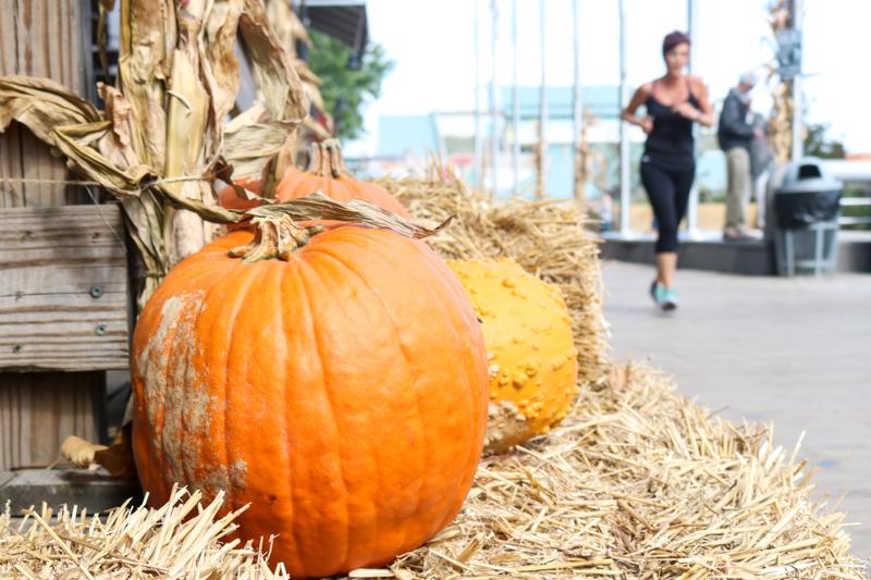 Pumpkins on the SSHP 'boardwalk'