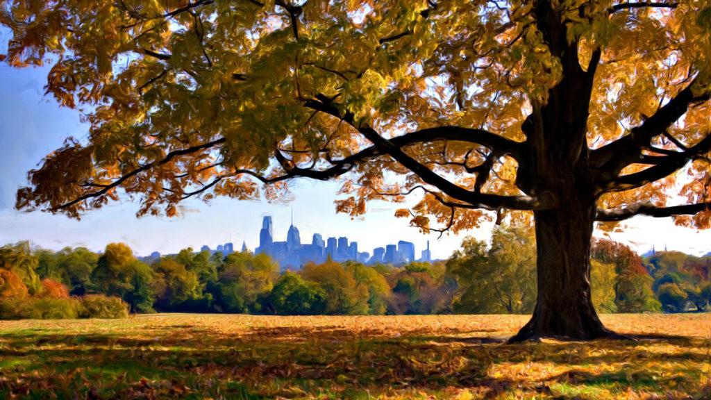 Help Us Find Philly S Prettiest Fall Trees On Top Of Philly News
