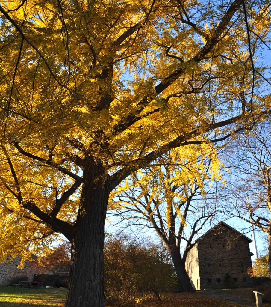 falltree-bartramsgarden
