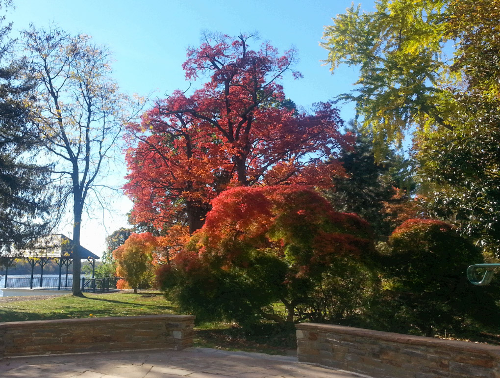 falltree-glenfoerd