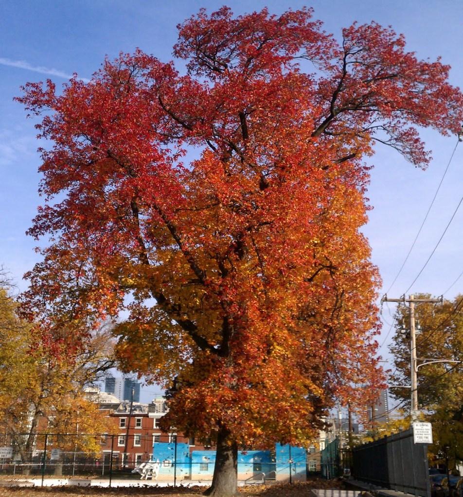 falltree-ridgwaypark