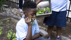 A Duckrey student smells the fresh herbs he just harvested at Osteria