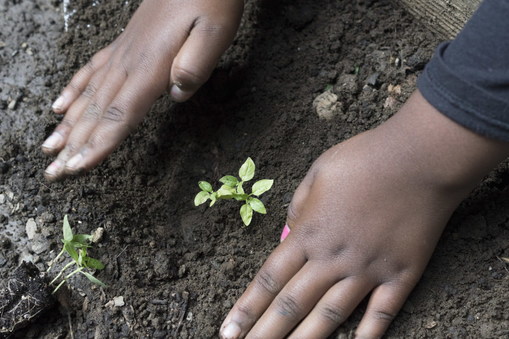 Handling seedlings requires some care