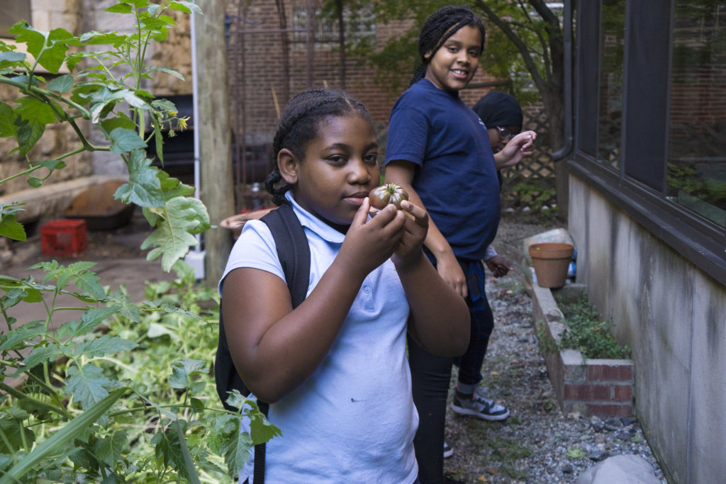 A student admires a tomato from a seedling she planted