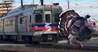 septa-turkey