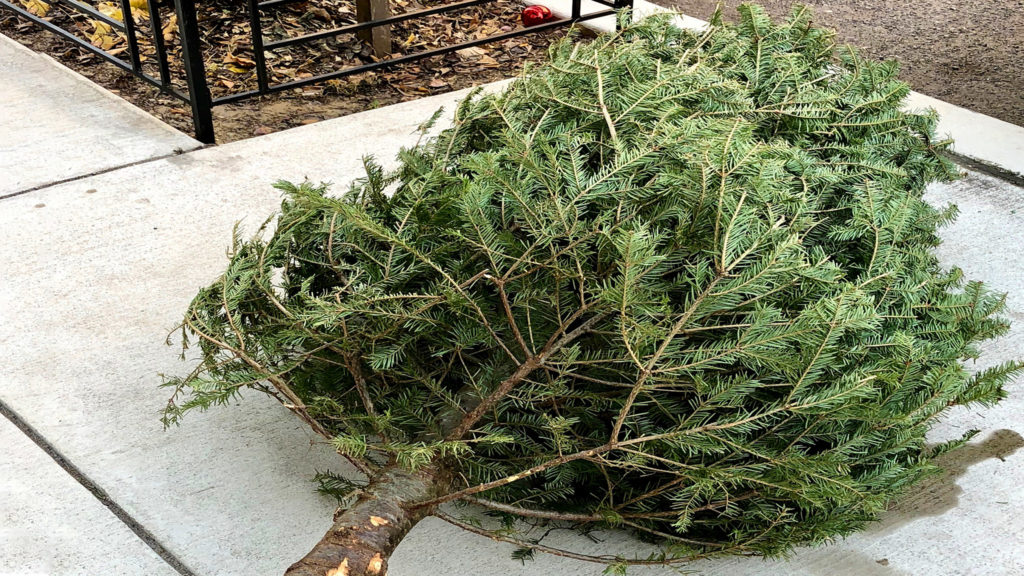 Recycle your Christmas tree in Philly: How, where and when to do it - On top of Philly news