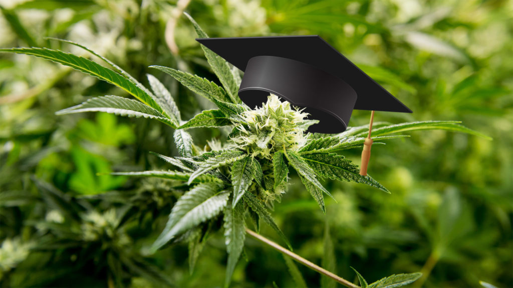 weed-college