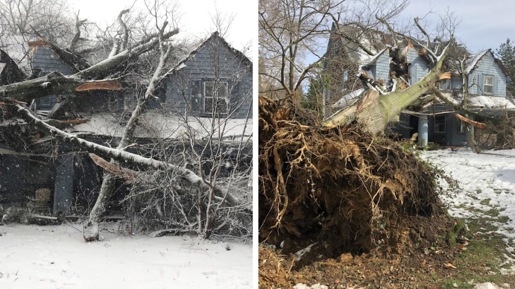 A house in Bala Cynwyd that got nearly crushed by trees