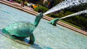 Swann Fountain is a rich evolutionary research resource