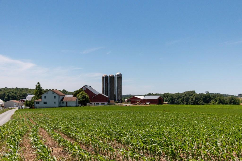Cedar Dream Farm, which provides dairy for Abundantly Good cheese
