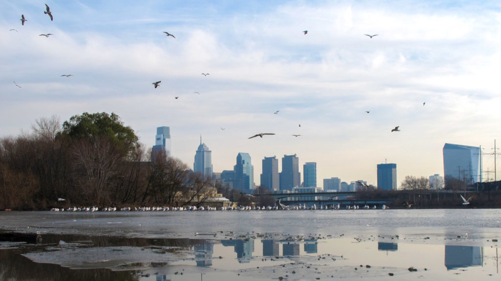 phillyskyline-birds