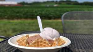 Wilbur chocolate and honeyed lavender ice cream at Fox Meadows Creamery in Ephrata, Pa.