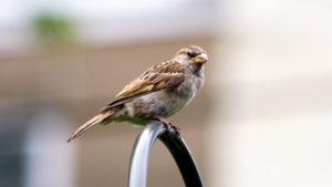 sparrow-phillypark