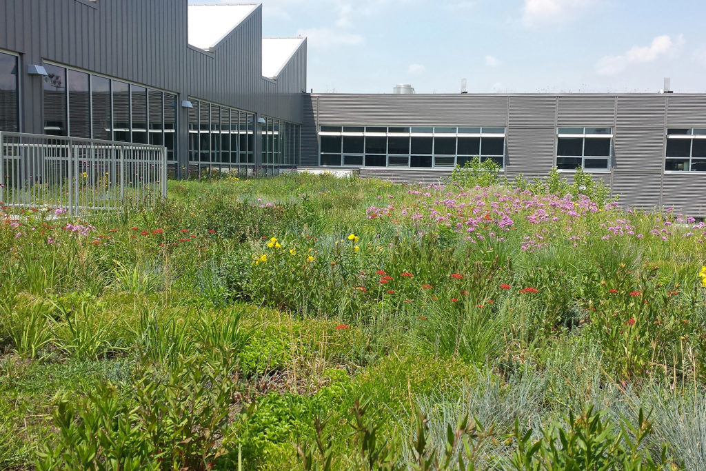 Kensington High School has a green roof