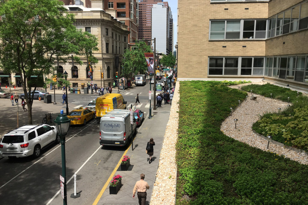 A green roof in Rittenhouse