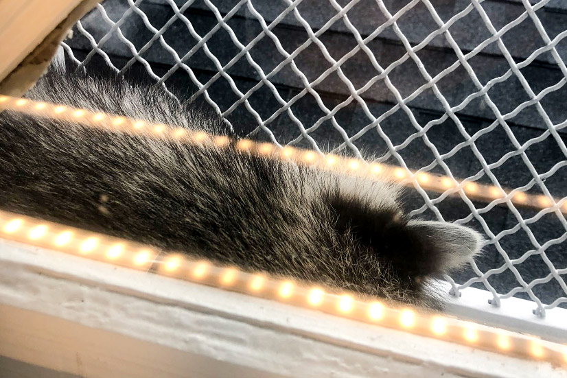 The raccoon snoozes on the sunny side of the Free Library's Tacony branch