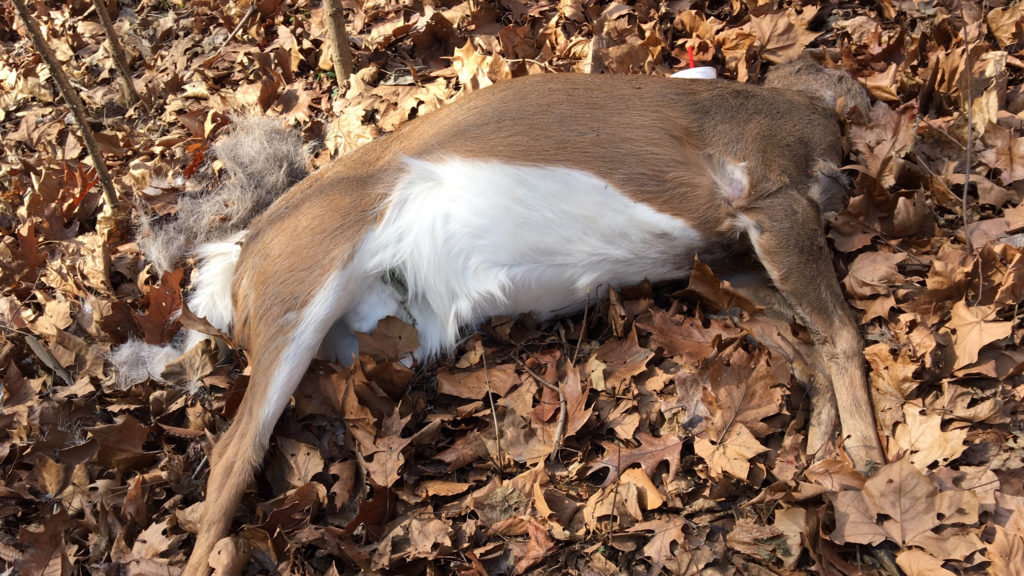 A decapitated deer spotted in Fairmount Park this month