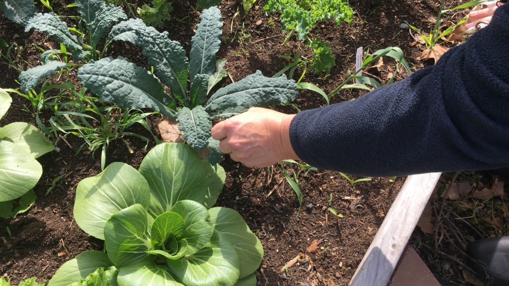 Director of Food Services Jeffrey Gump explores the garden at Self Help Movement