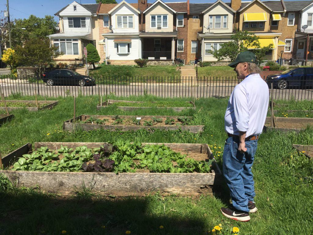 Anthony Conte looks over his crop of cabbage and broccoli at the Depaul residential center