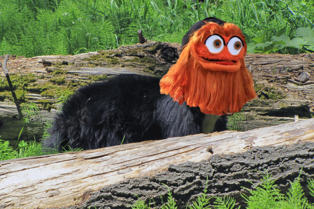 bear-gritty