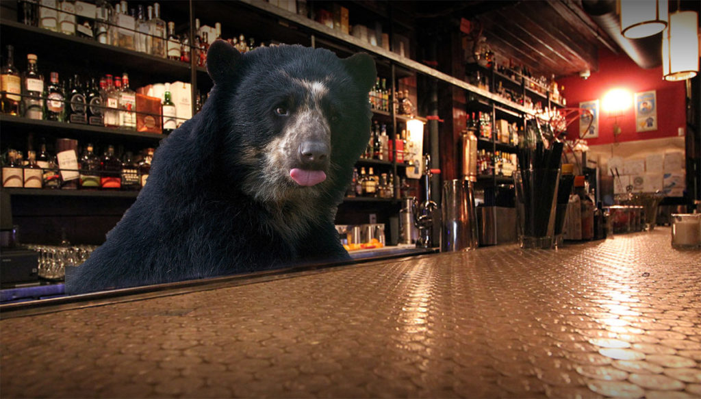 bear-hopsing