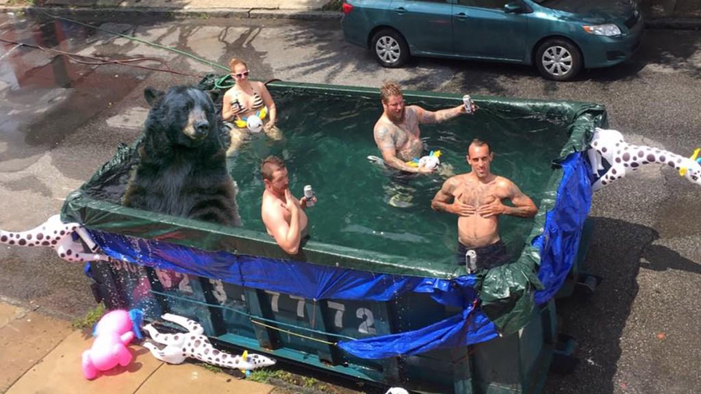 bear-pool