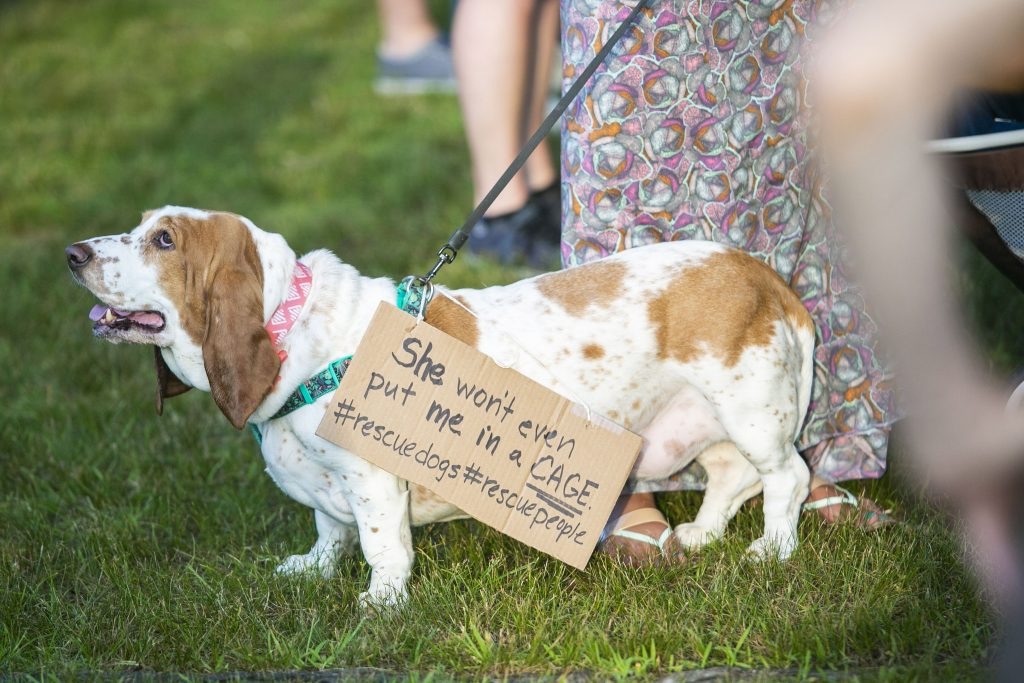 A dog holds a sign at the Collingswood vigil