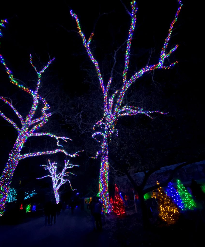 phillyzoo-luminatureholidaylights-13