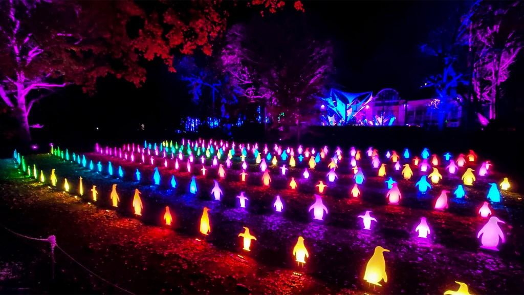 philadelphia zoo light show