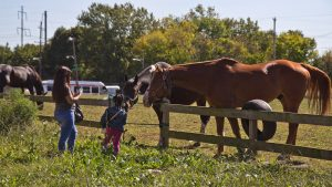 Neighbors say hello to the horses grazing at the lot across from the stables