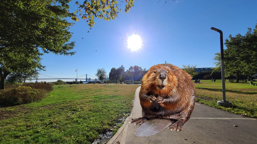 Fishtown naturalists are excited over an apparent beaver at Penn Treaty Park (not to scale)