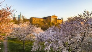 artmuseum-sunset-treescherryblossoms3-crop