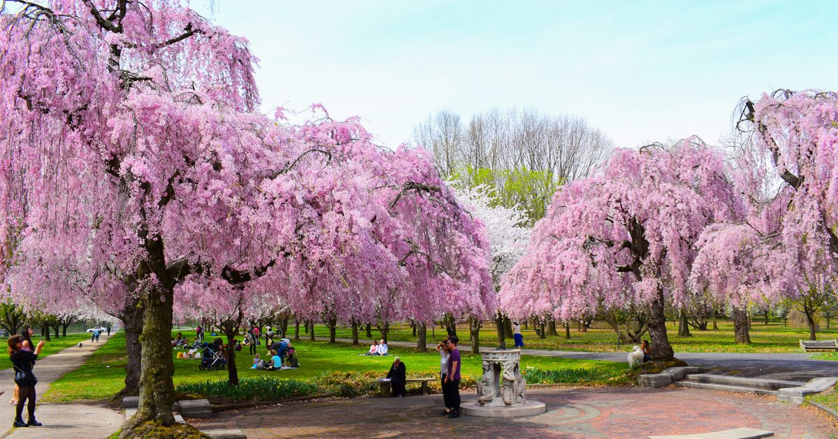 Philadelphia Cherry Blossoms At Parks On Tap Beer Garden On Top Of Philly News
