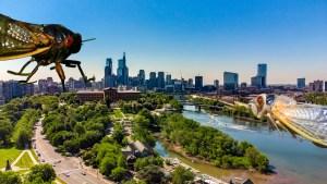 phillyskyline-cicadas