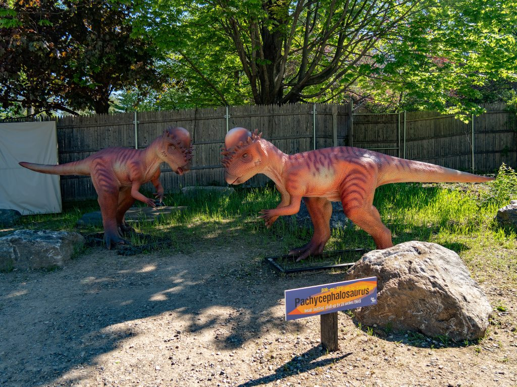 Head-Butting Pachycephalosaurs Were Actually Herbivores