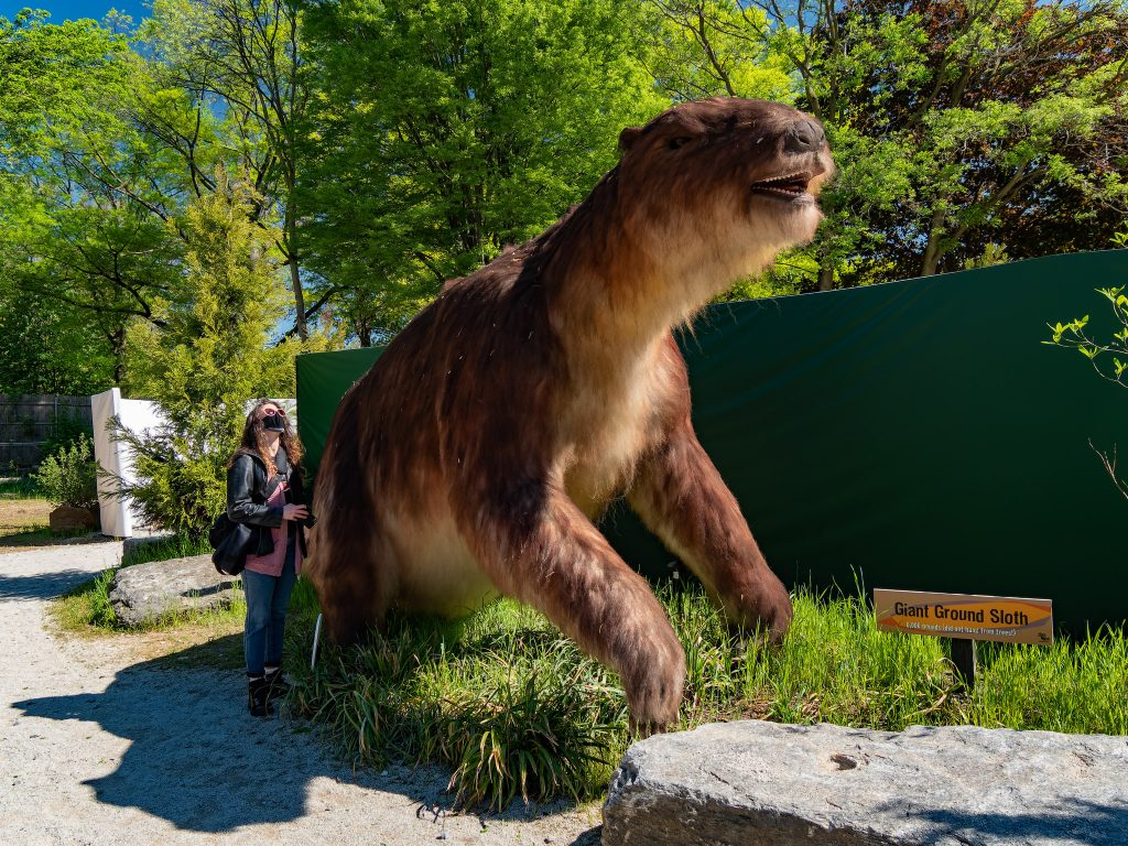 A giant sloth lives up to its name